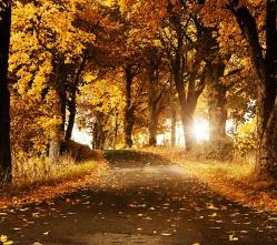 Nature-wallpaper-9660372.jpg